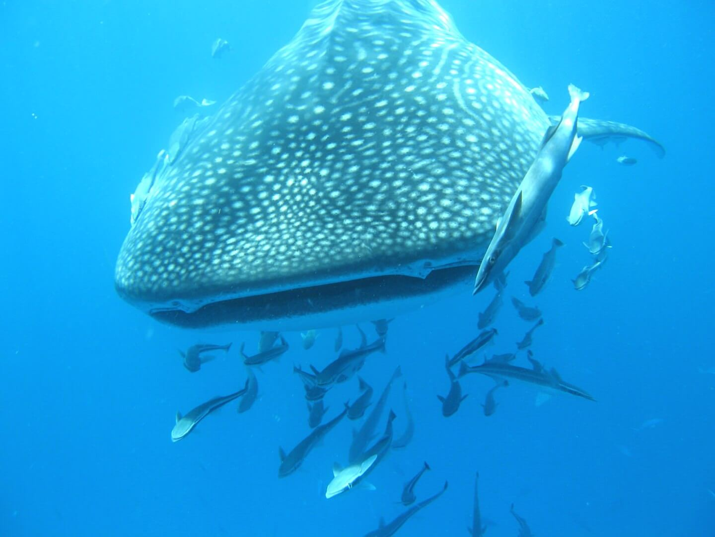 Blue Sea Divers | Blue Sea Divers
