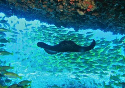 Blue-Sea-Divers-Seychelles-026