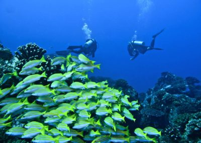 Blue-Sea-Divers-Seychelles-09