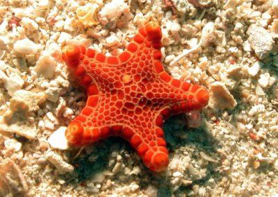 Blue-Sea-Divers-Seychelles-004