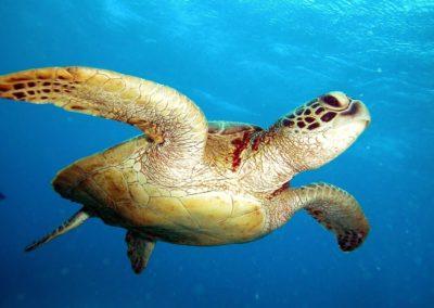 Blue-Sea-Divers-Seychelles-006