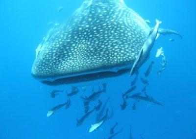 Blue-Sea-Divers-Seychelles-007