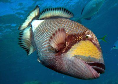 Blue-Sea-Divers-Seychelles-009