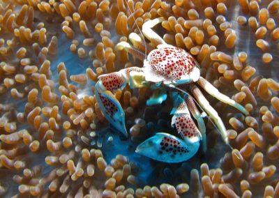 Blue-Sea-Divers-Seychelles-018