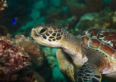 Blue-Sea-Divers-Seychelles-019